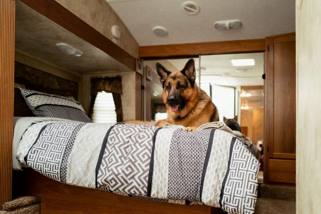 RVing with pets Hudson & Rex trailer