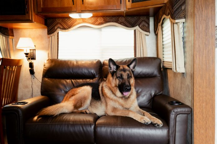 RV with pets Hudson & Rex trailer